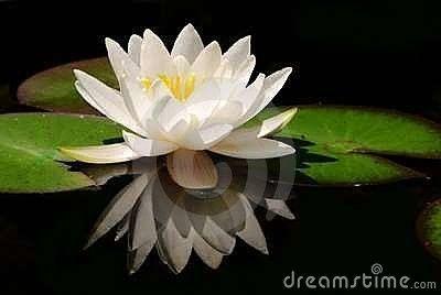 Signification de la fleur de lotus - Image fleur de lotus ...