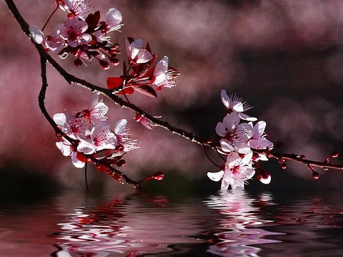 pour une magnifique fleur*